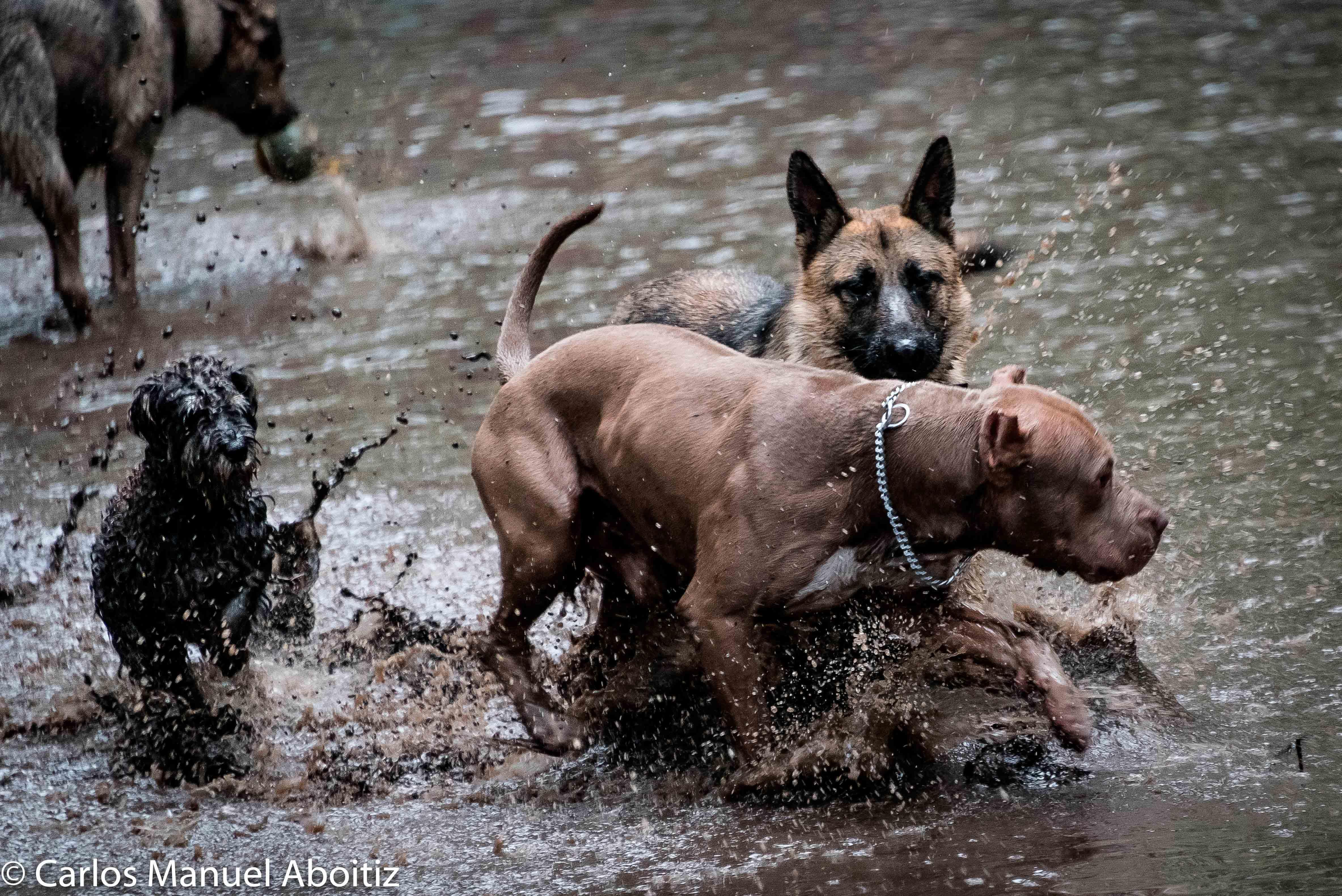 Perros en la Condesa